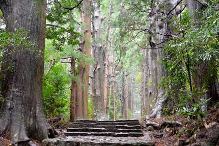 The Kumano Kodō criss-crosses through the Japanese mountains